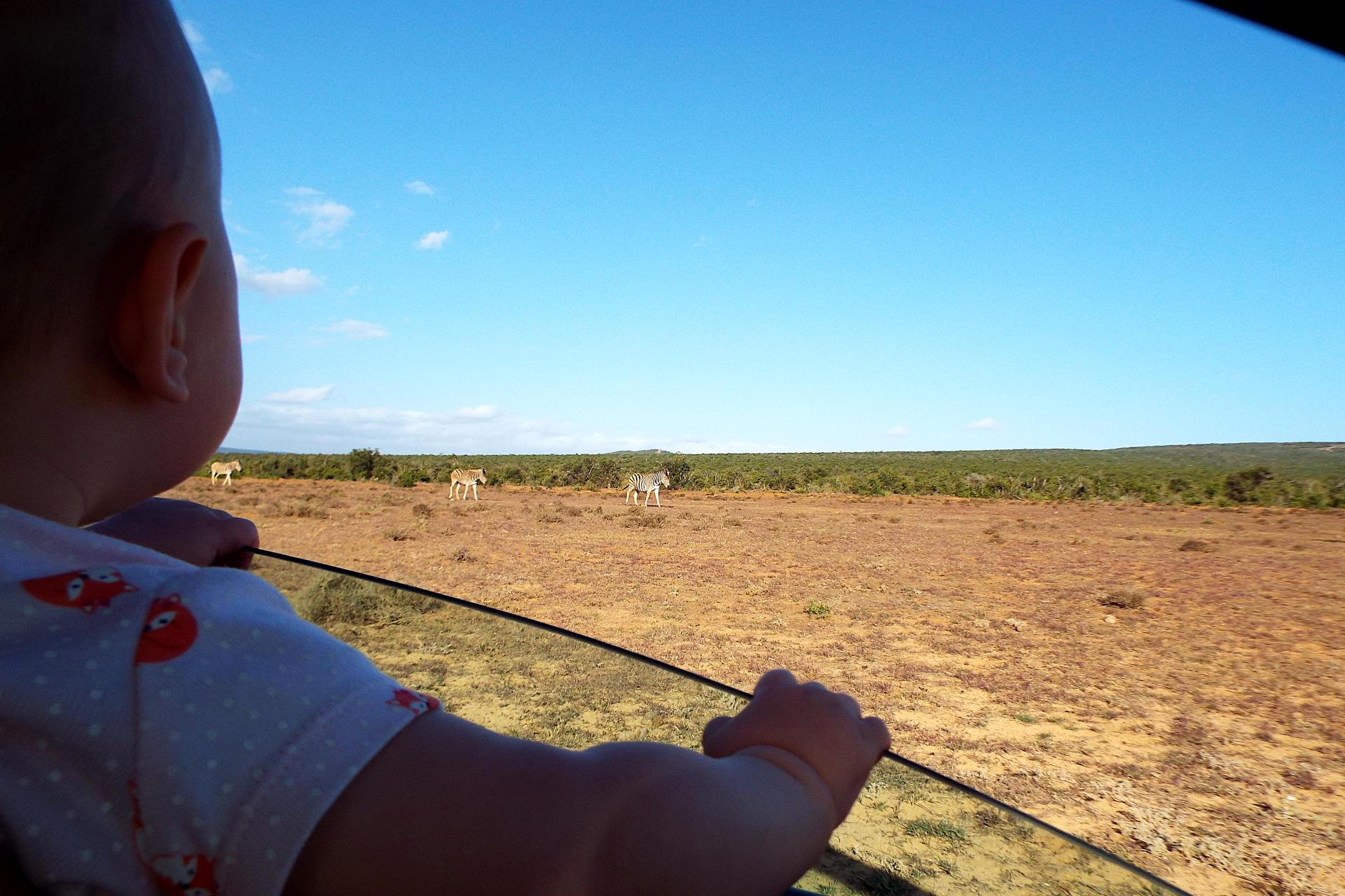 Voyager avec un bébé en Afrique du Sud