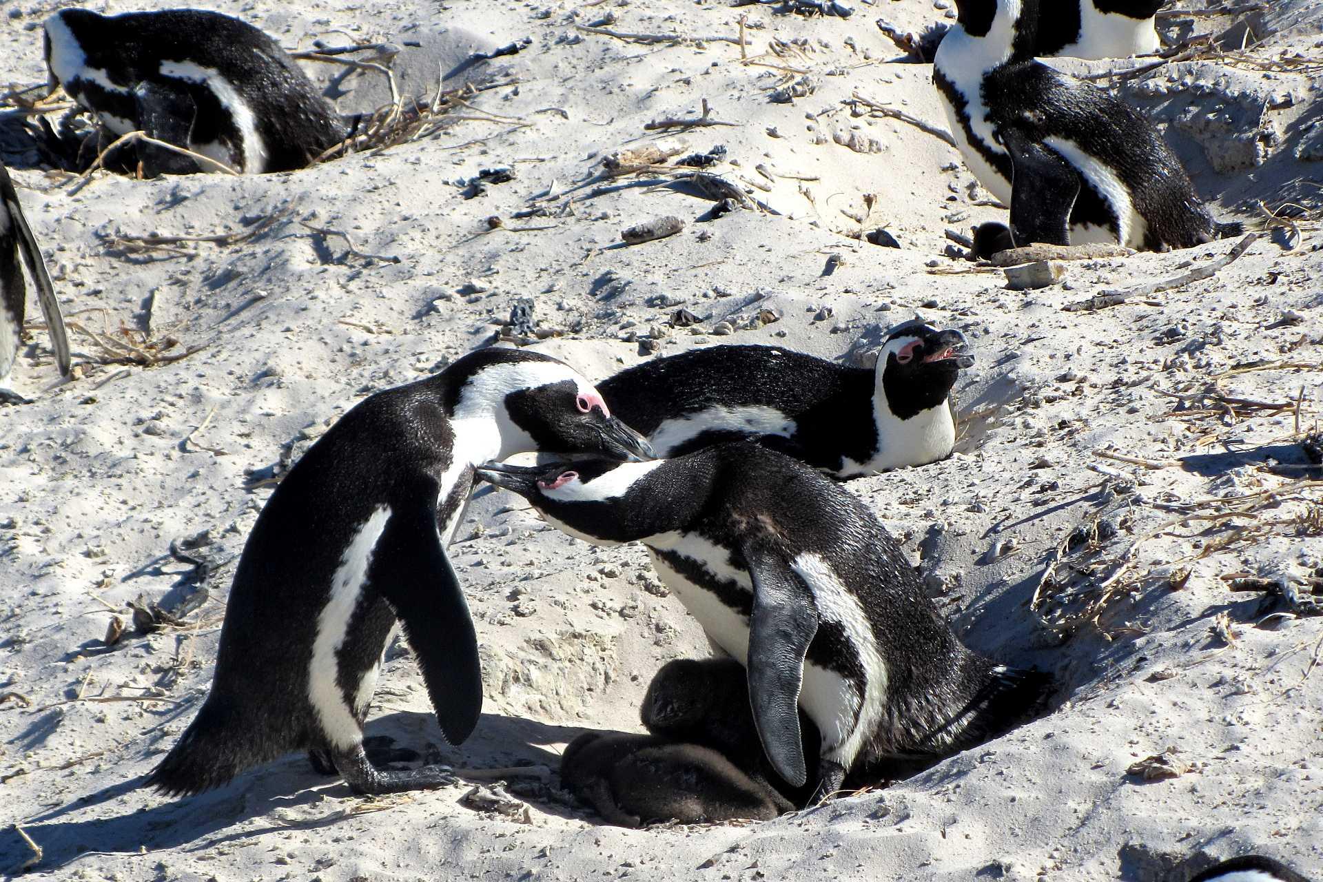 Beautés du Cap et safari au parc Kruger - Confort +