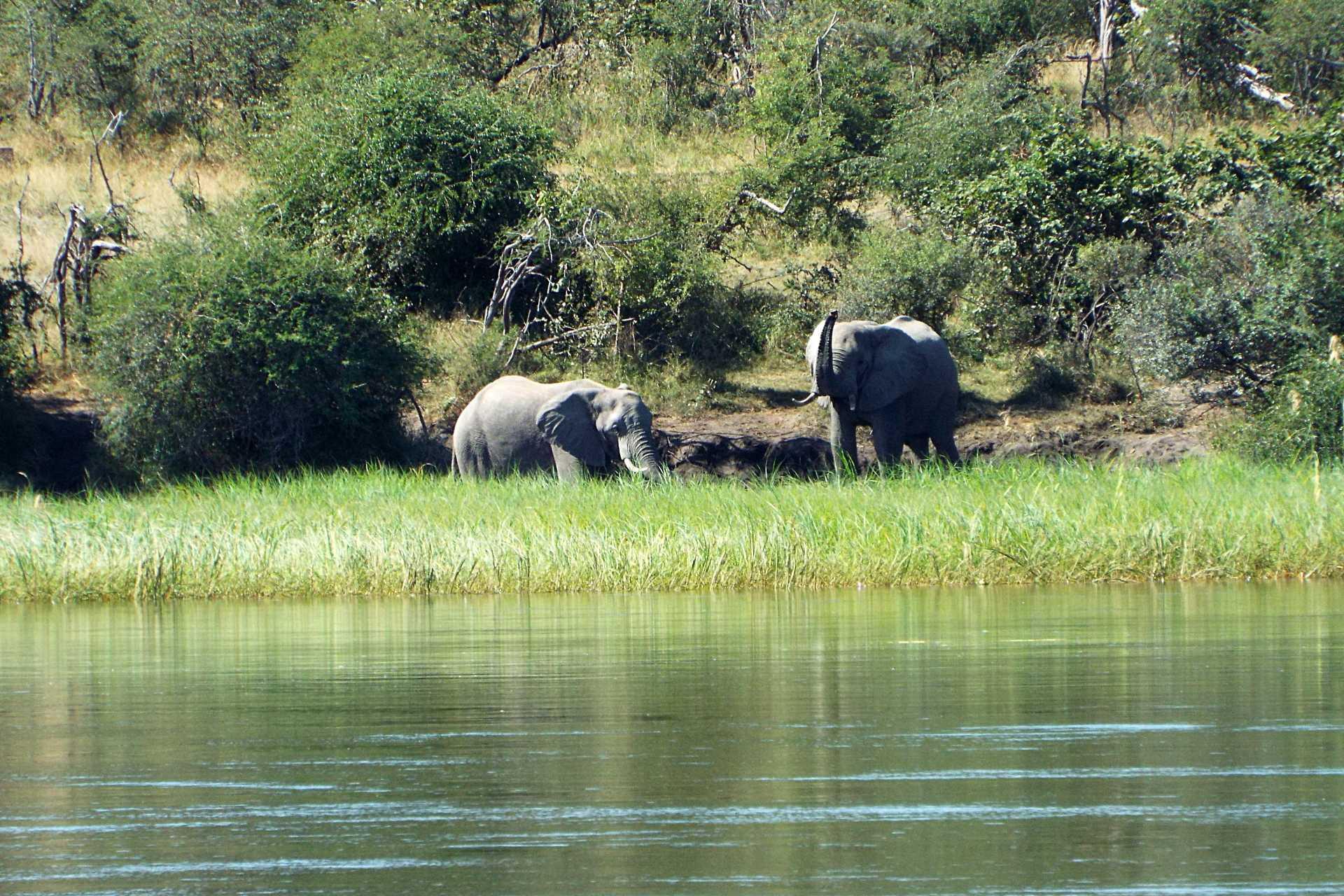 Caprivi - Les éléphants