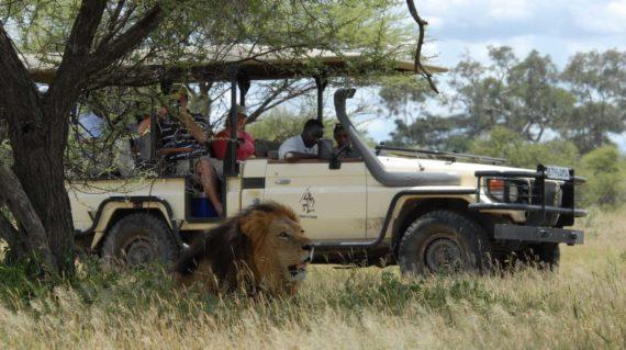 Delta de l'Okavango - Safari