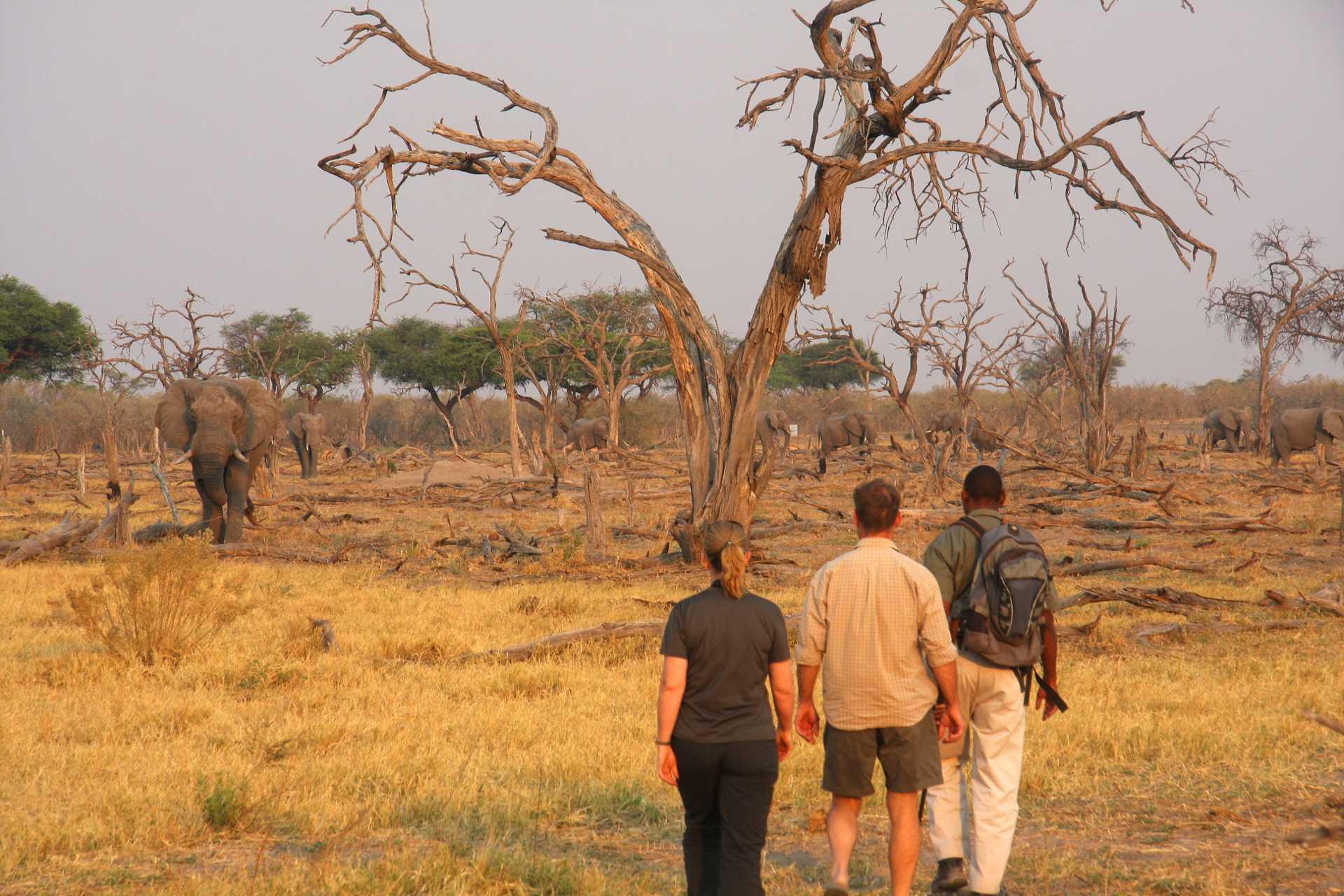 Delta de l'Okavango - Safari à pied