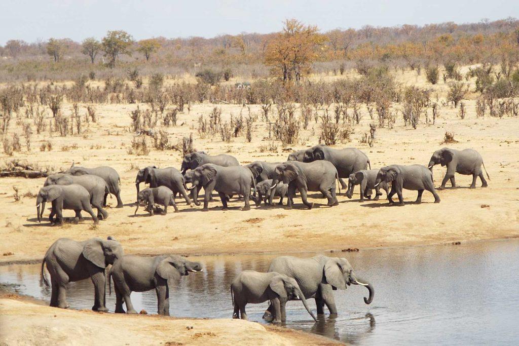 Hwange - Elephants