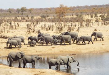 Hwange - Elephants