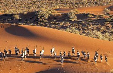 Kalahari Park - Oryx