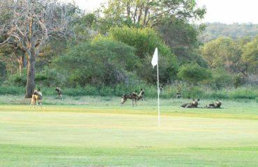 Kruger - Skukuza - Golf