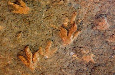 Lesotho - Empreintes de dinosaures