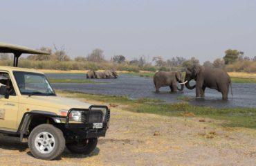 Maun - Safaris dans le delta de l'Okavango
