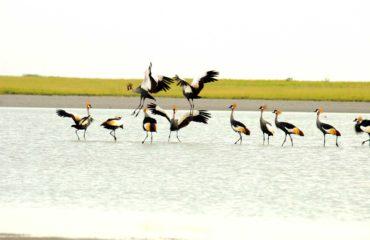 Nata - Sanctuaire pour les oiseaux