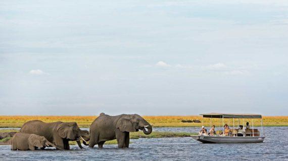Parc National Chobe - Croisière