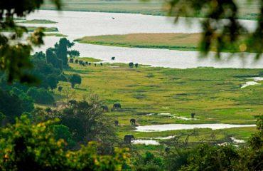 Parc National Chobe - Les éléphants