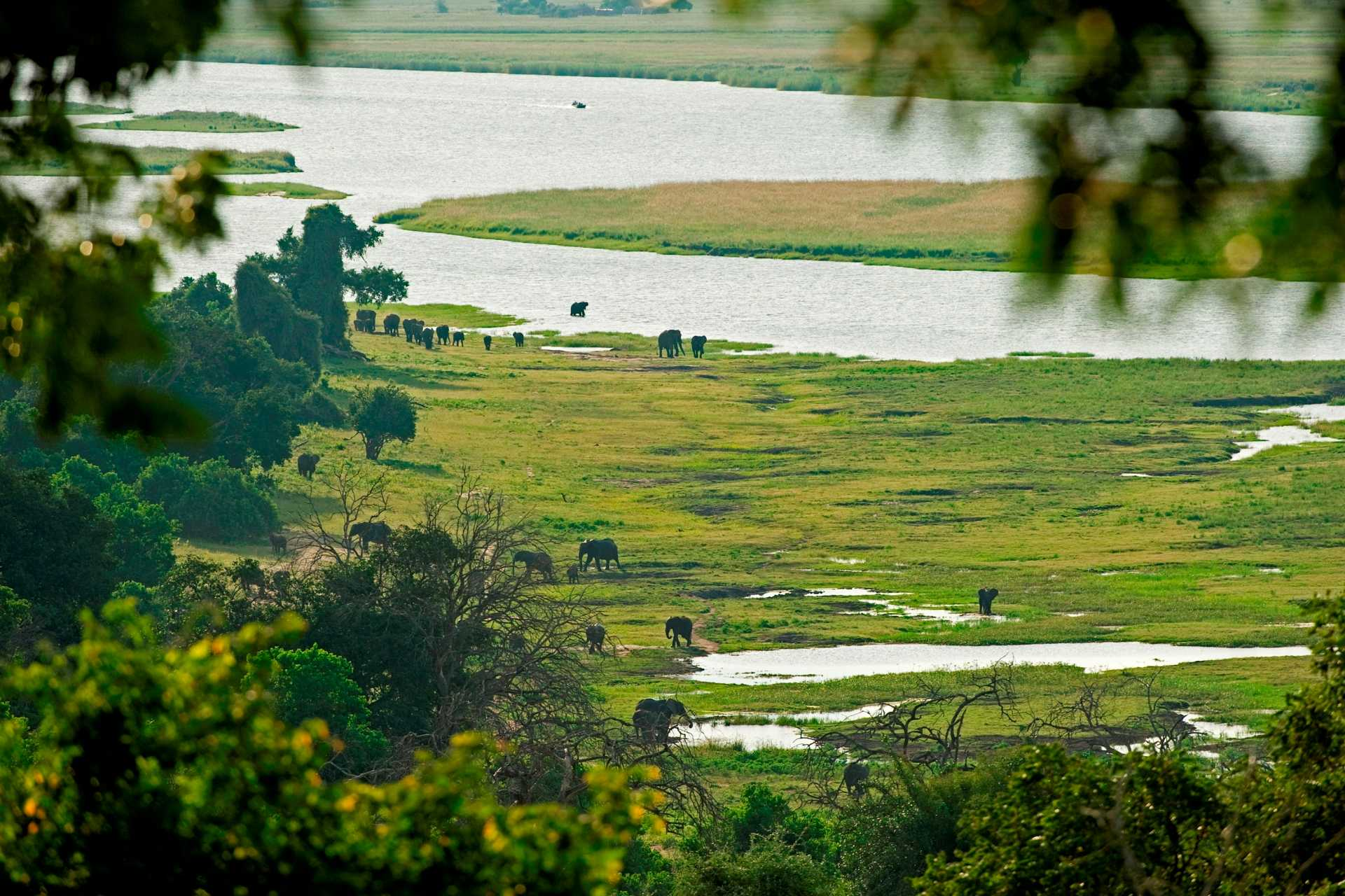 Parc National Chobe - Les éléphants