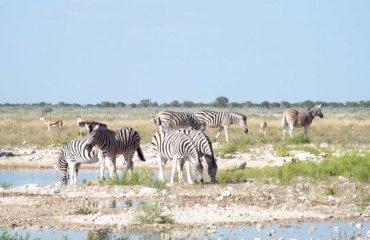 Parc National Etosha - La faune sauvage