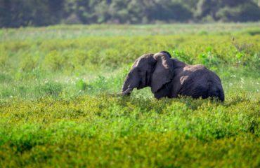 Parc Tembe - Un éléphant