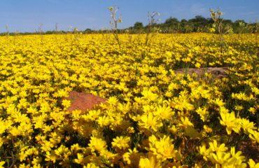 Parc national Namaqua