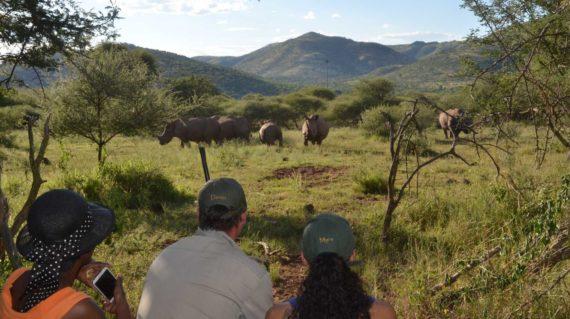 Pilanesberg - Rhino