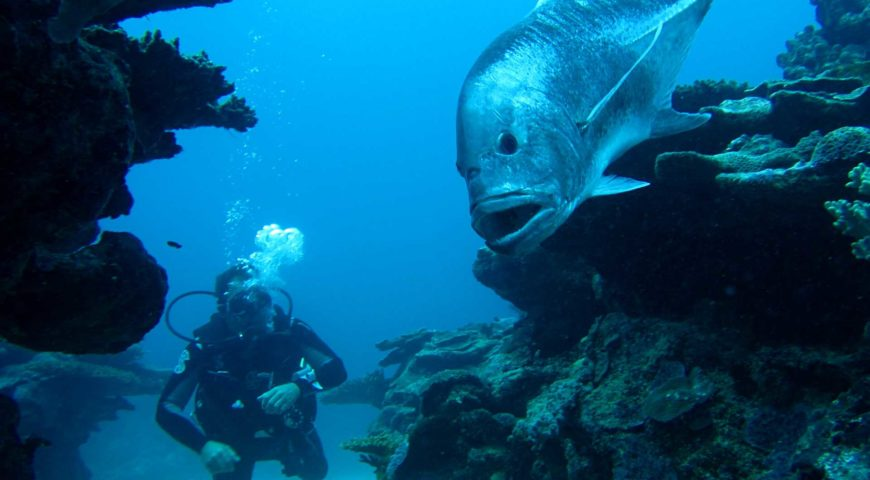 Plongée à l'Île Rodrigues
