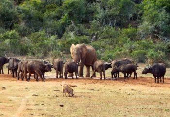 Port Elizabeth - Le parc Addo