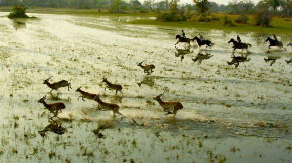 Safaris à cheval - Les antilopes