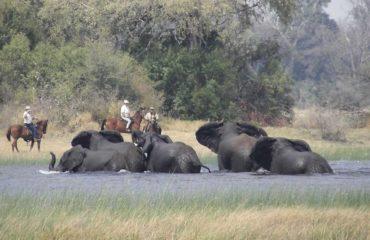 Safaris à cheval - Les éléphants