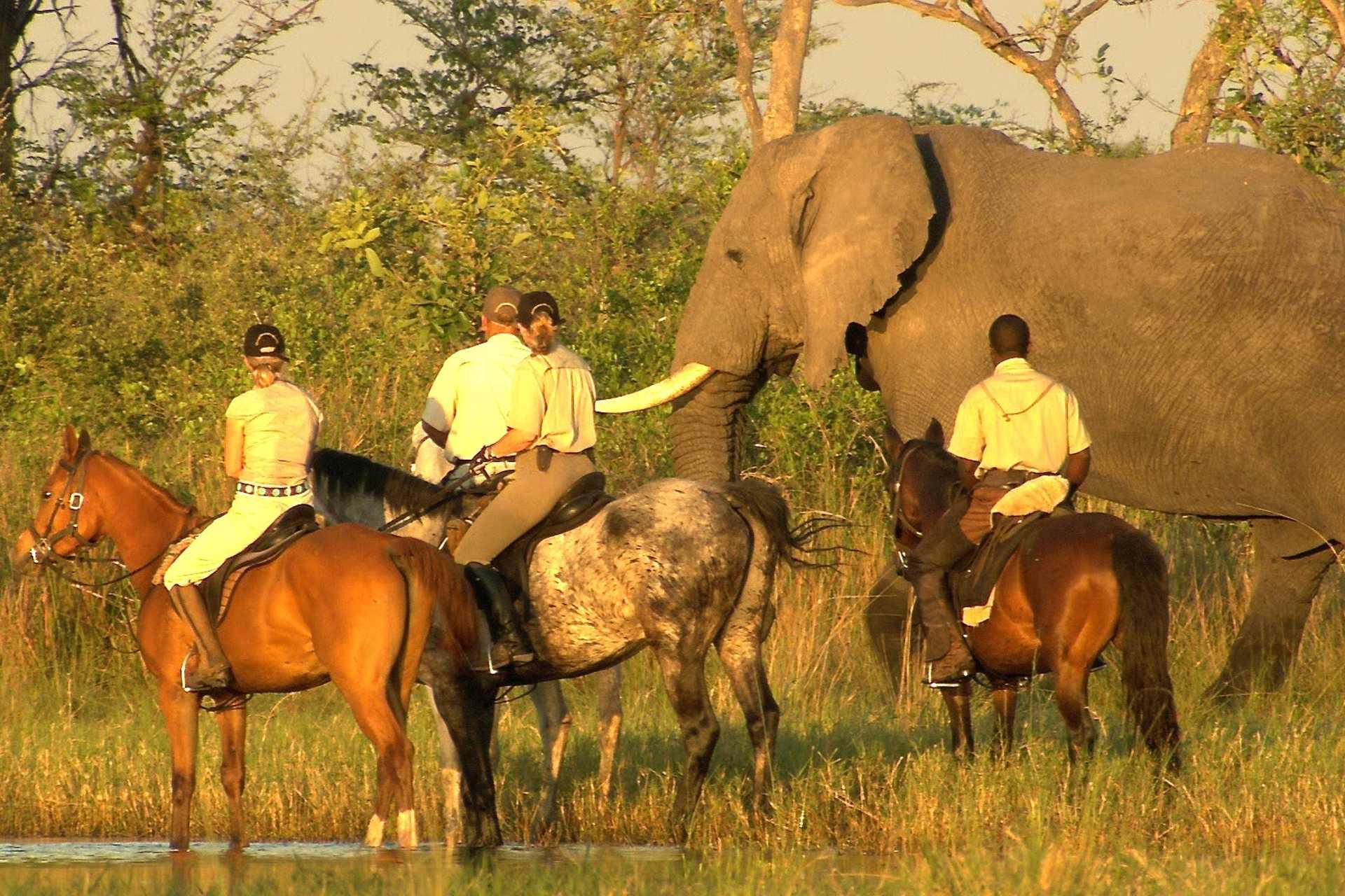 Safaris à cheval - Un éléphant