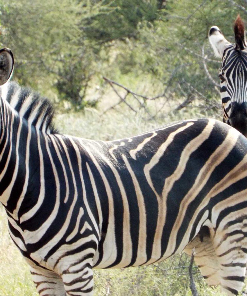 Safaris dans le Grand Nord