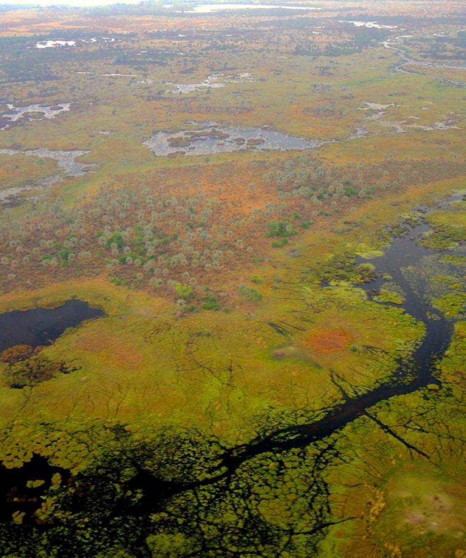 Safaris dans le delta de l'Okavango