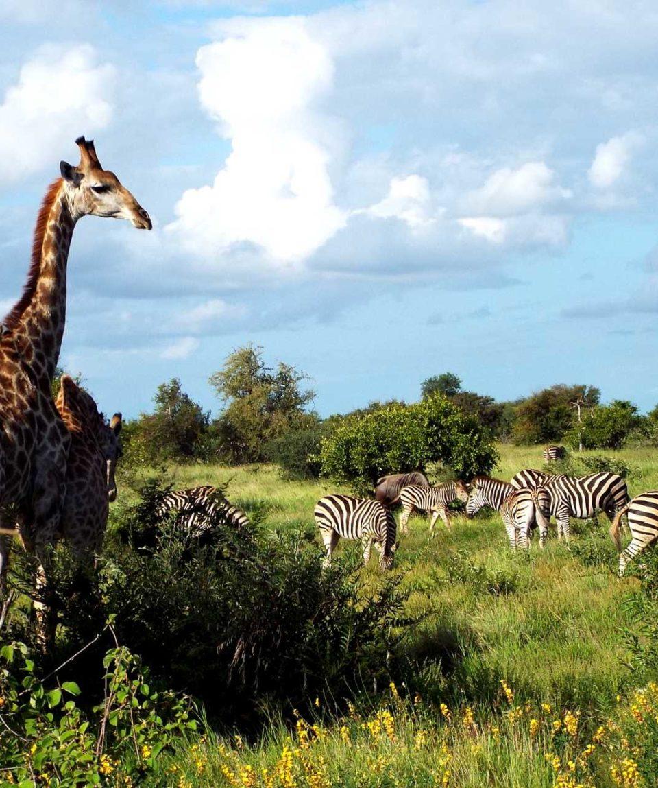 Safaris en Afrique du Sud - Confort