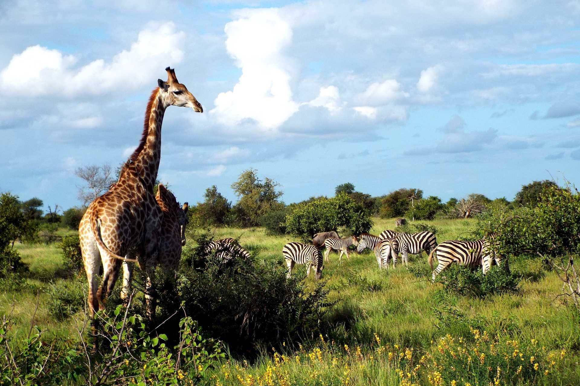 voyage safaris en afrique du sud - confort