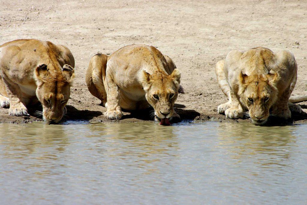 Safaris privatifs en Tanzanie