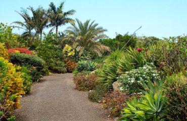 Saint-Pierre - Vistite d'un jardin botanique