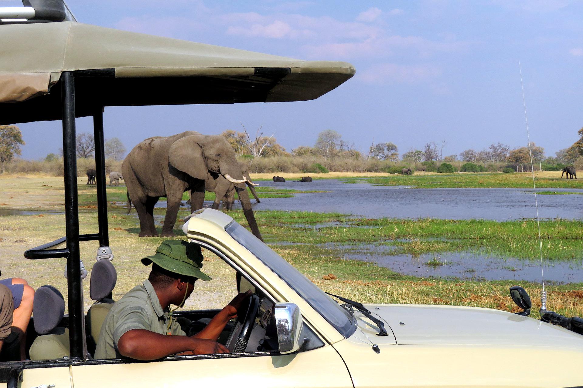 Botswana - Mobile Safari avec un guide