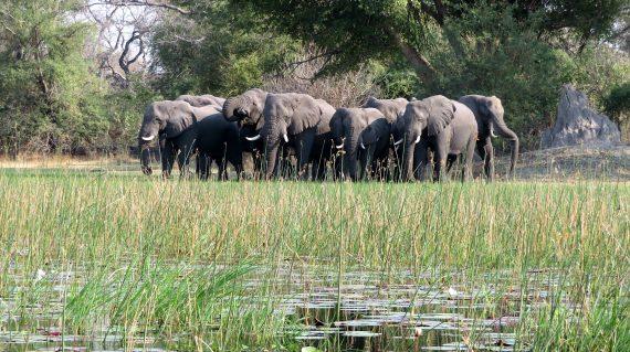 Maun - mokoro et éléphants
