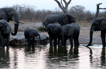 parc national Chobe - Elephants