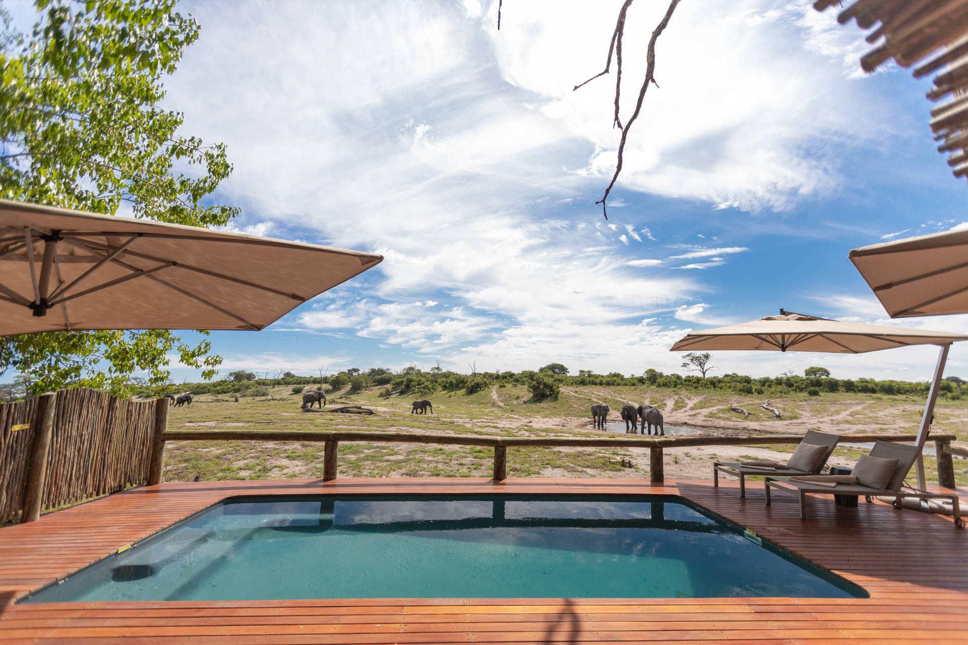 Safaris entre désert et delta - lodge Savute