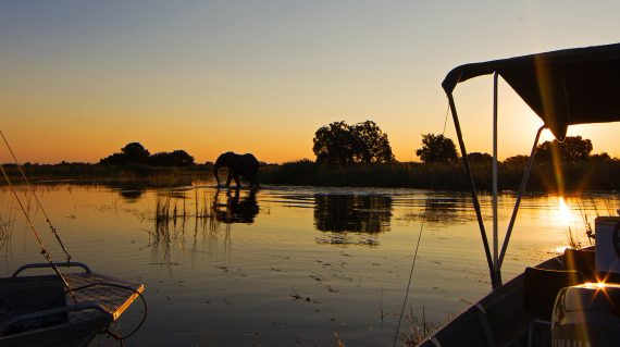 Botswana - Camp Okavango - éléphant