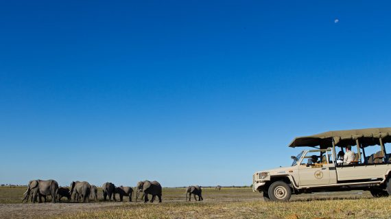 Botswana - Chobe Game Lodge - Safari