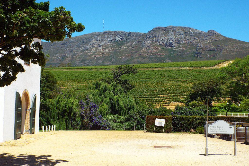 Cape Town - les vignobles