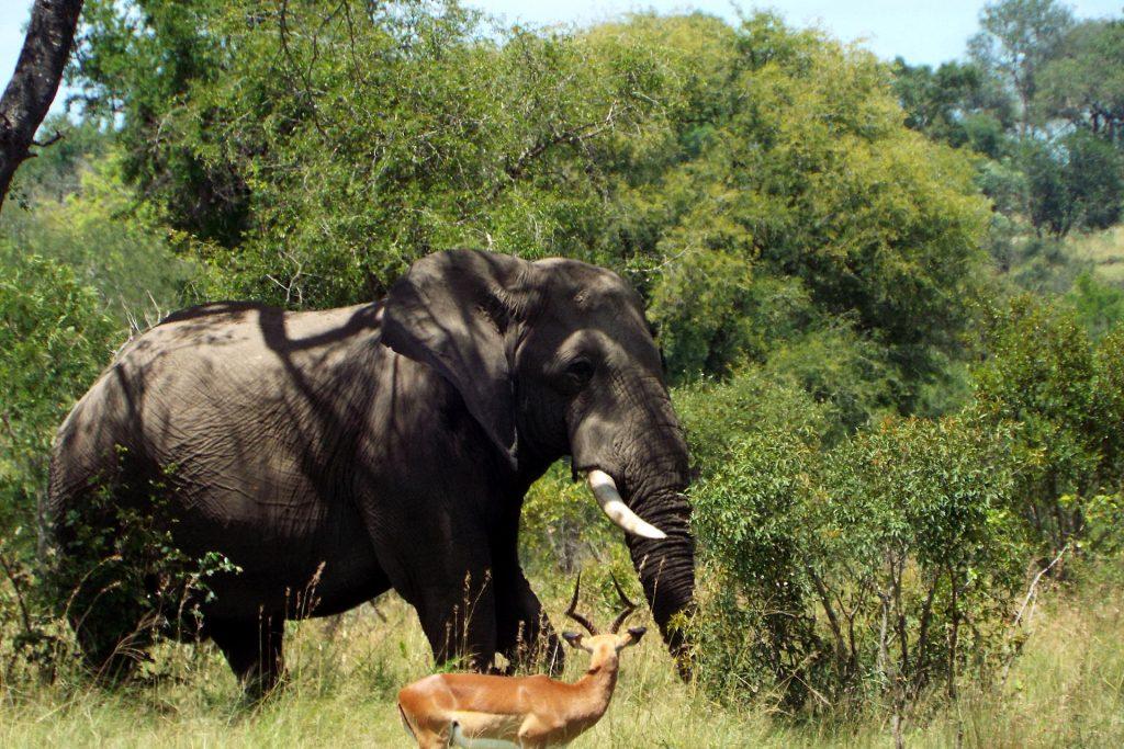 parc Kruger - safari