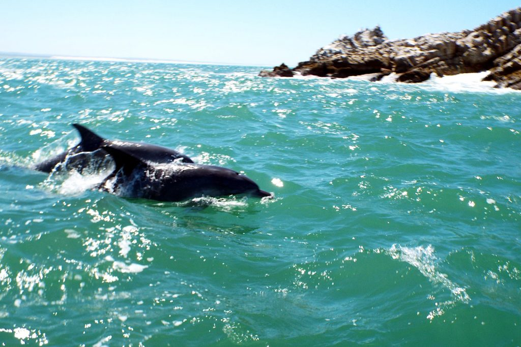Port Elizabeth - les dauphins