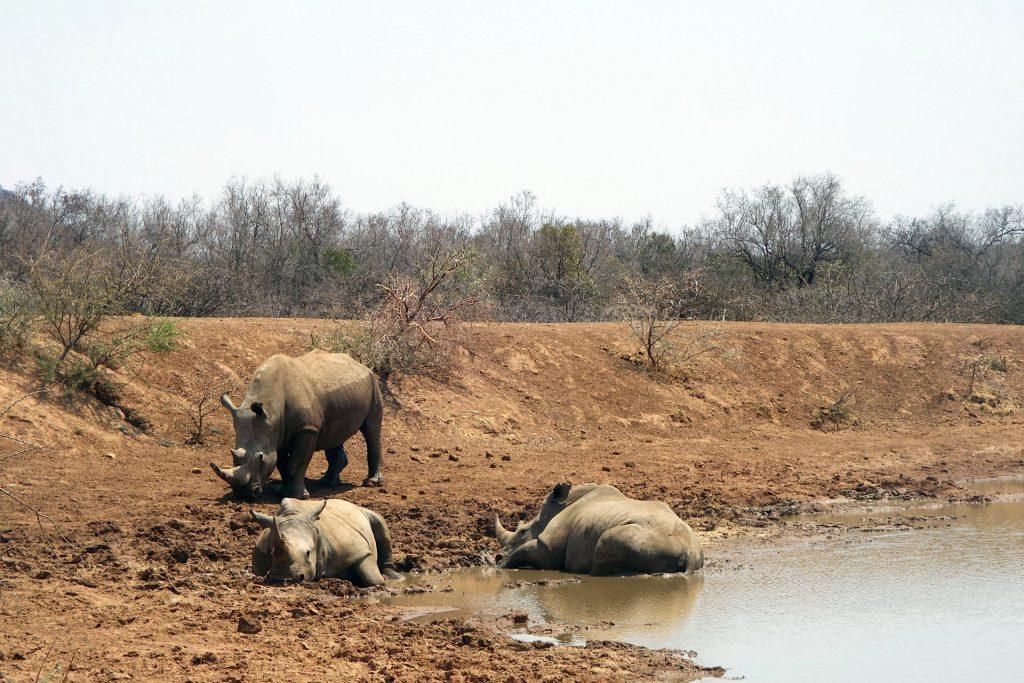 Suncity - safari au Pilanesberg