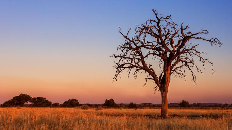 Les déserts du Botswana avec guide francophone - Kalahari