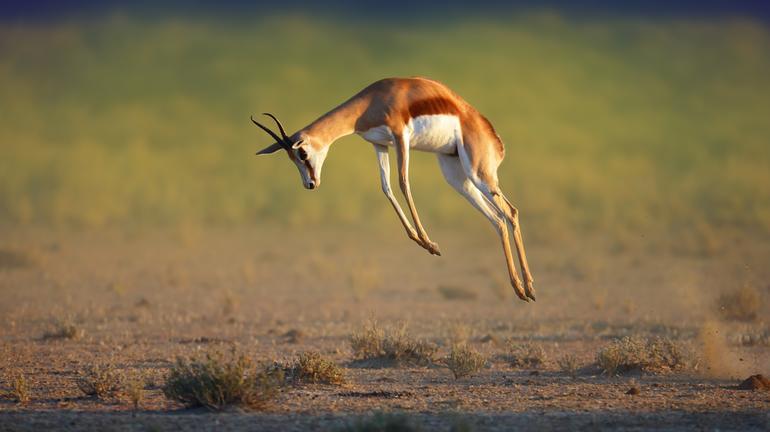 Les déserts du Botswana avec guide francophone - Kalahari 2
