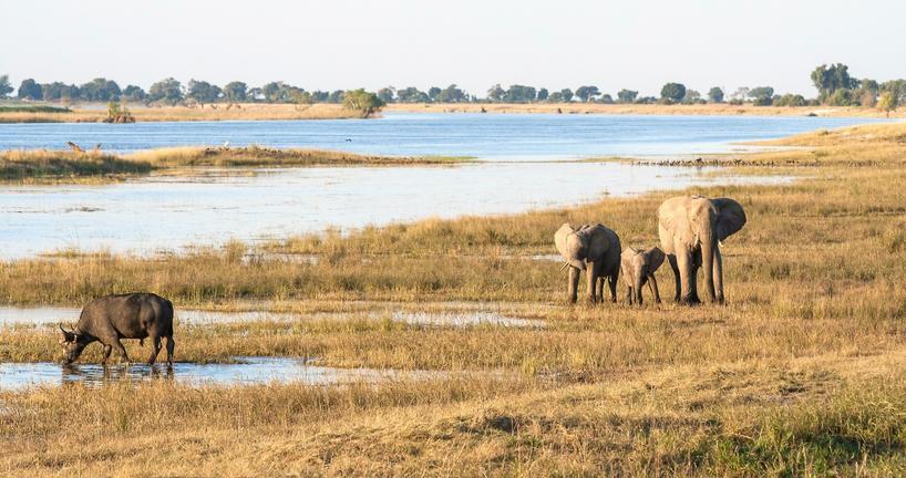 Les déserts du Botswana avec guide francophone - Maun