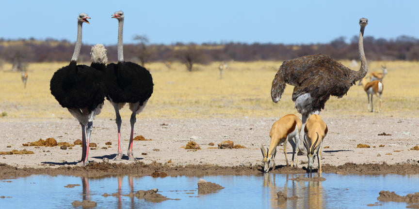 Les déserts du Botswana avec guide francophone - NXai
