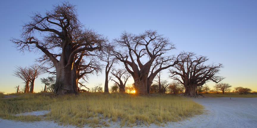 Les déserts du Botswana avec guide francophone - NXai 2