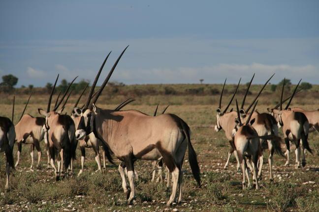 Les déserts du Botswana avec guide francophone - Kalahari 3