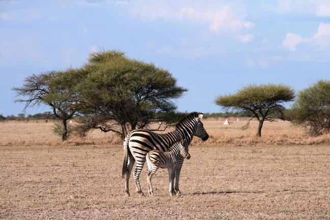 Les déserts du Botswana avec guide francophone - NXai 3