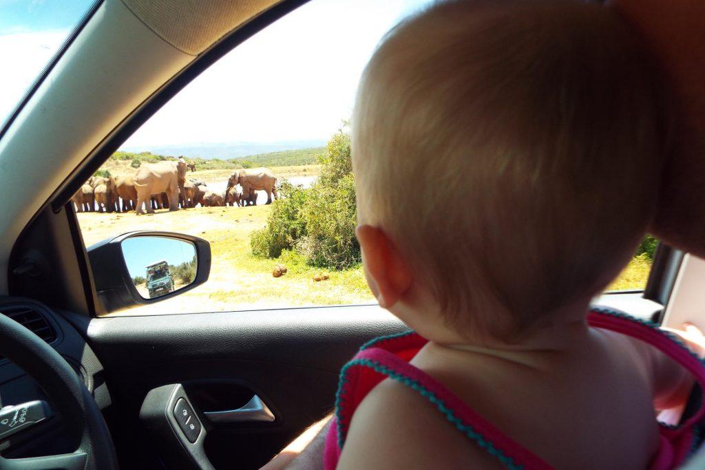 Voyager avec un bébé en Afrique du Sud - safari