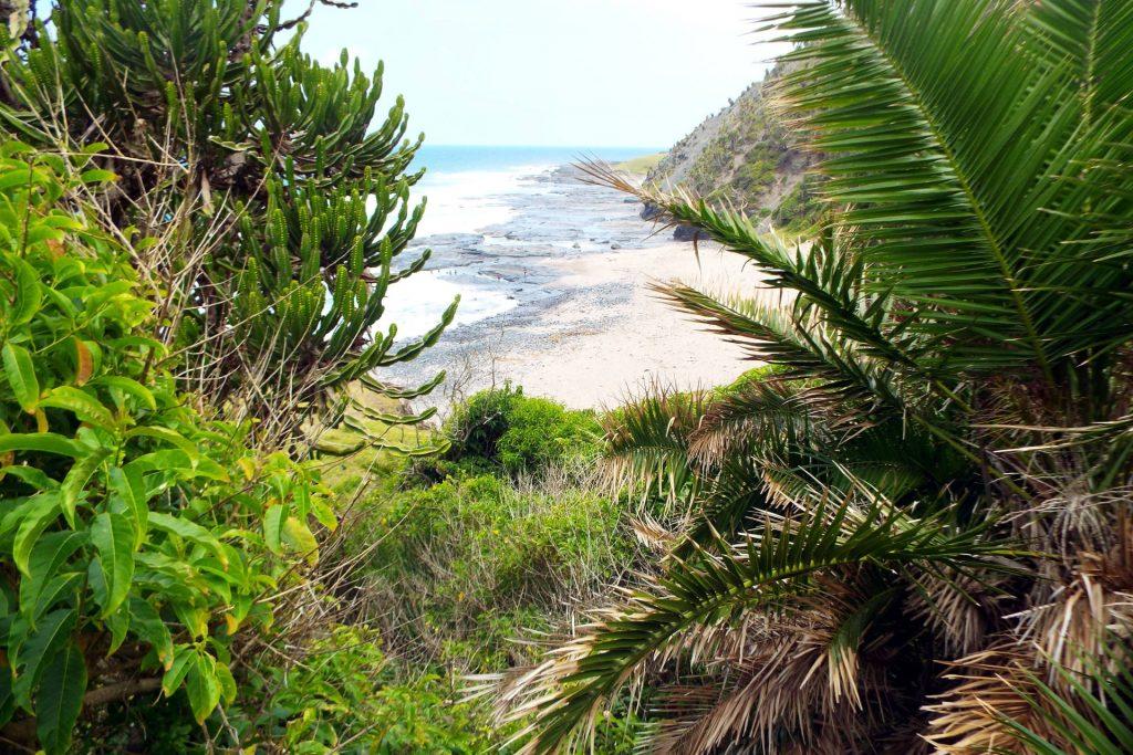 Afrique du Sud - Coffee Bay - Nature