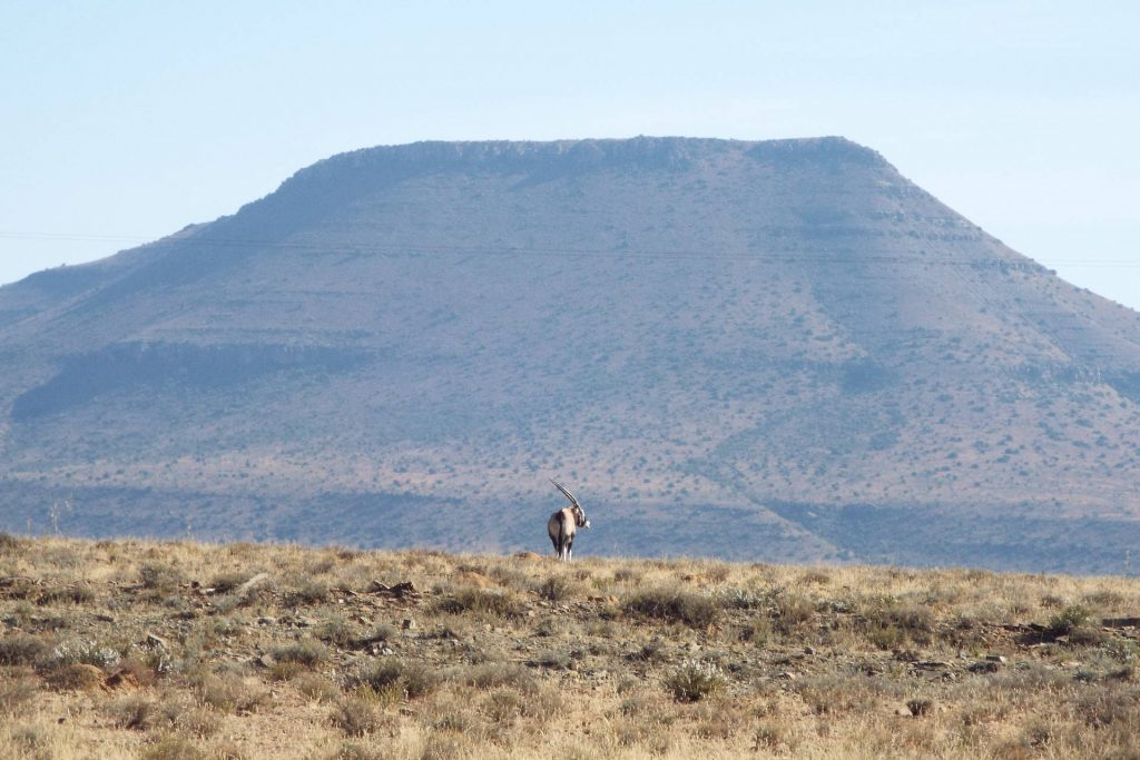 Afrique du Sud - Mountain Zebra National Park - Oryx